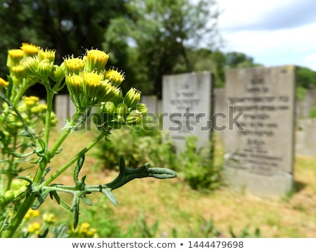 A tombstone on an old graveyard in Holland Stock photo © michaklootwijk