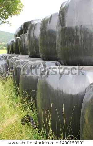 stock photo of a harvested field with straw bales in summer stock photo © borgdrone
