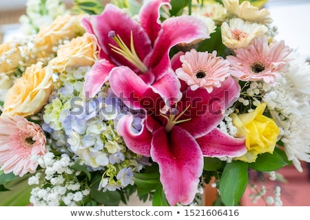 Mooie roze lelie tuin bloem Stockfoto © Julietphotography