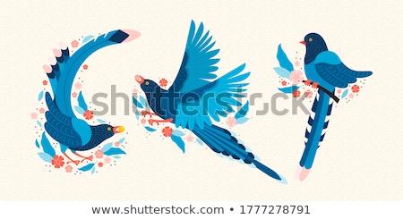 Bleu belle photos oiseau plumes tête Photo stock © laurenstrimpe