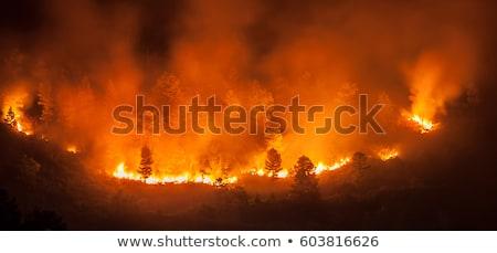 ardente · floresta · pôr · do · sol · noite · cérebro · preto - foto stock © loopall