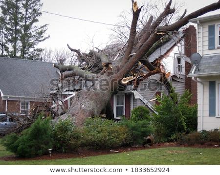 Fallen Tree Stock photo © eldadcarin