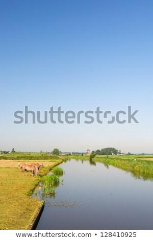 オランダ語 風景 水 草 馬 春 ストックフォト © gigra