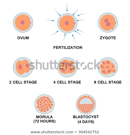 Natural insemination: sperm and human egg Stock photo © 4designersart