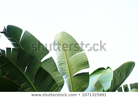 the close up of the green palm leaf stock photo © wjarek