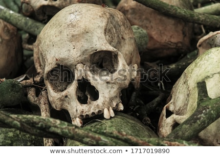 ancient skull Stock photo © GekaSkr