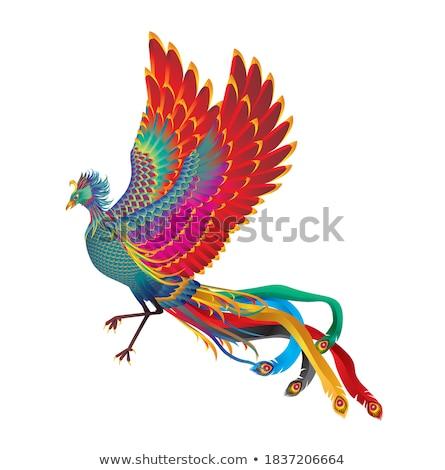 Vector afbeelding phoenix heldere kleur brand Stockfoto © Glenofobiya