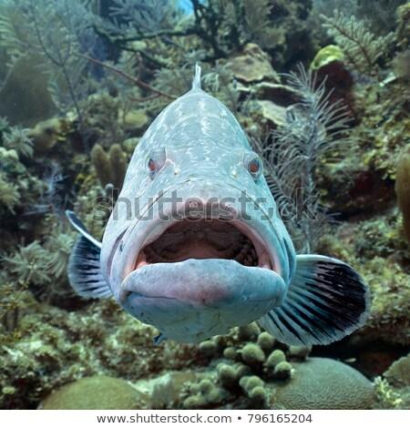 плаванию · аквариум · рыбы · морем · океана · красный - Сток-фото © Lynx_aqua