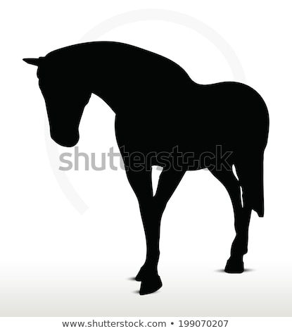 horse silhouette in walking head down position stock photo © istanbul2009