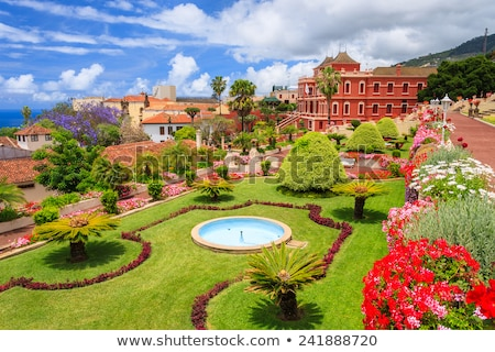 Flora of Tenerife, Canary Islands. Spain Stock photo © amok