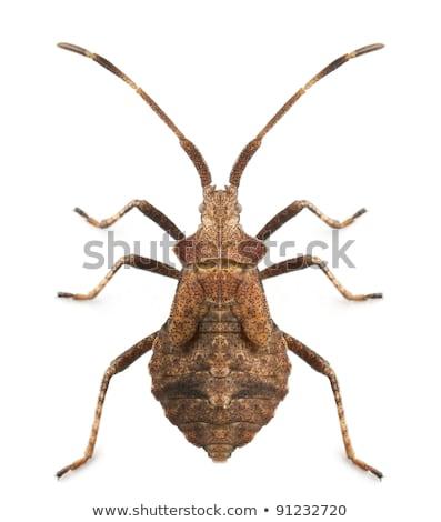 Dokk rovar fű portré tanulás park Stock fotó © t3rmiit