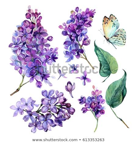 水彩画 紫色の花 赤 液果類 花 紙 ストックフォト © artibelka