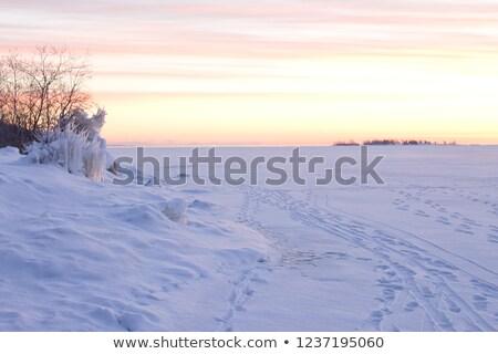 Early Morning Snowdrift stock photo © mpetersheim