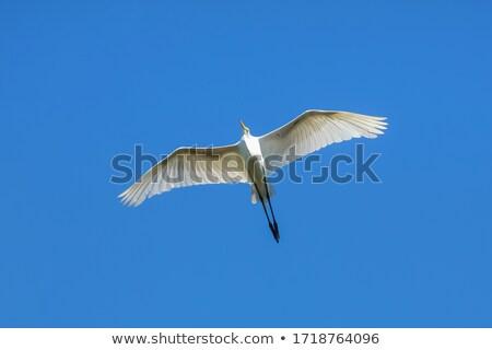 piccolo · volo · cielo · blu · natura · blu · libertà - foto d'archivio © rekemp