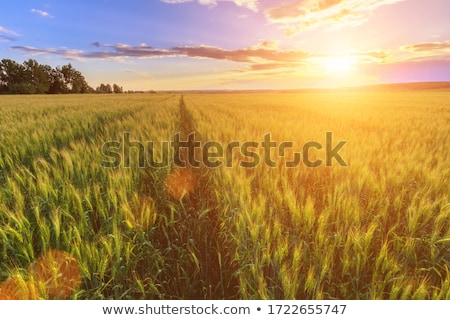 agricultural farmlands stock photo © lovleah
