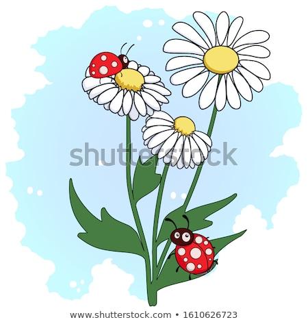 joaninha · margarida · primavera · natureza · jardim - foto stock © alphaspirit