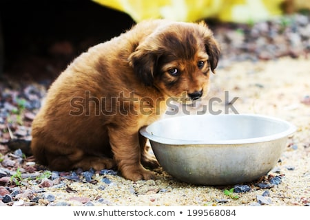 Cute stray puppies playing Stock photo © Juhku
