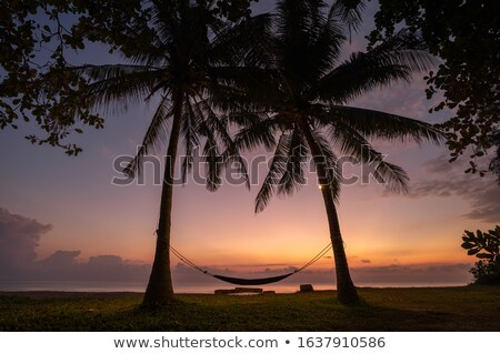 Palmiers mer sunrise matin paysage plage Photo stock © Mikko