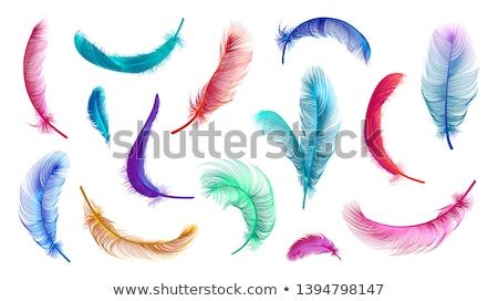 Farbenreich Feder weiß Design Hintergrund blau Stock foto © zven0