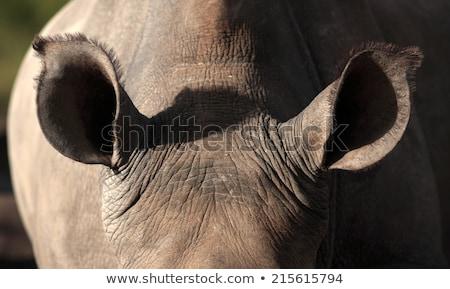 黒 · サイ · 公園 · 1 · ビッグ · 動物 - ストックフォト © simoneeman