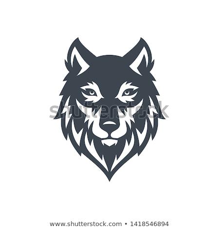 mavi · kurt · logo · örnek · karanlık · kafa - stok fotoğraf © doddis