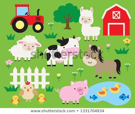 ストックフォト: 家畜 · 生活 · ファーム · 実例 · 自然 · 風景