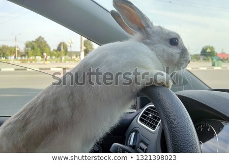 white beautiful rabbit easter bunny closeup stock photo © zurijeta
