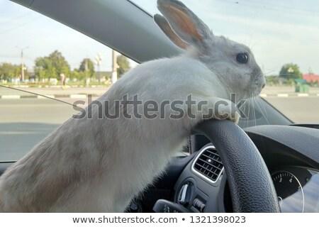 Stockfoto: White Beautiful Rabbit Easter Bunny Closeup