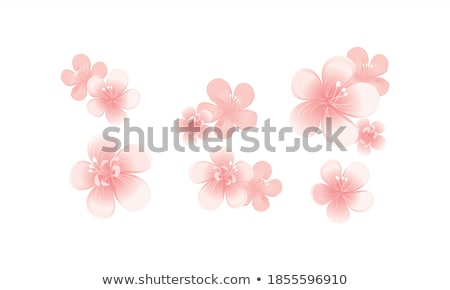 Sem costura sakura flores isolado branco eps Foto stock © beholdereye
