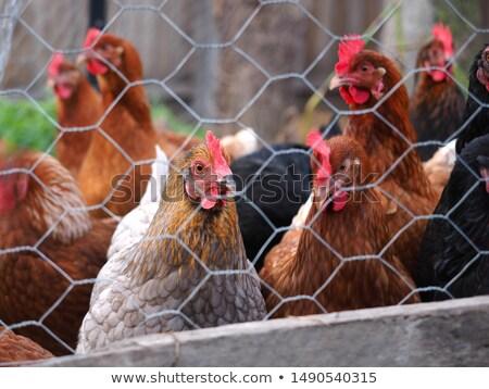 Many types of animal on farmyard Stock photo © bluering