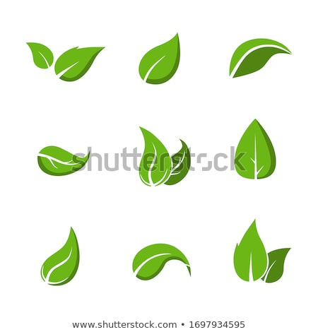 Different types of green leaves Stock photo © bluering