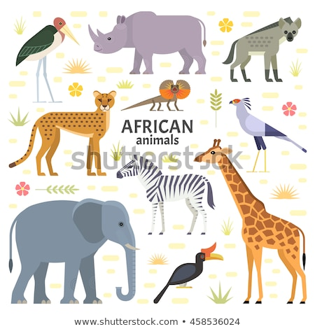 vector flat style set of desert wild animals stock photo © curiosity