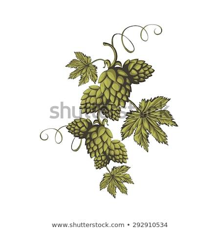Hop erbe impianto usato fabbrica di birra Foto d'archivio © frescomovie