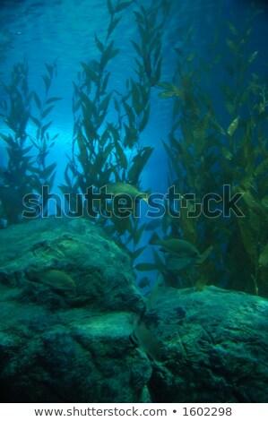 rocks and green algae under water stock photo © zhukow