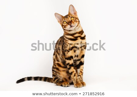 kat · portret · lopen · witte - stockfoto © cynoclub