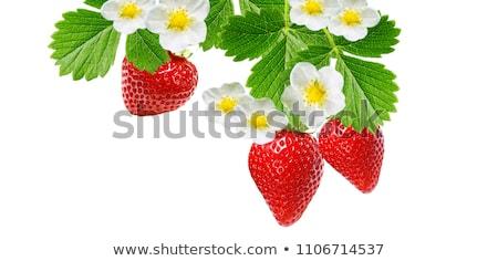 Blooming strawberries Stock photo © nenovbrothers