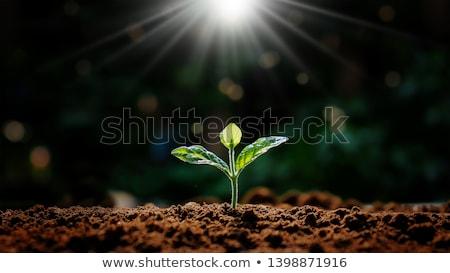 Día de la tierra suelo plantas suelo naturaleza Foto stock © popaukropa