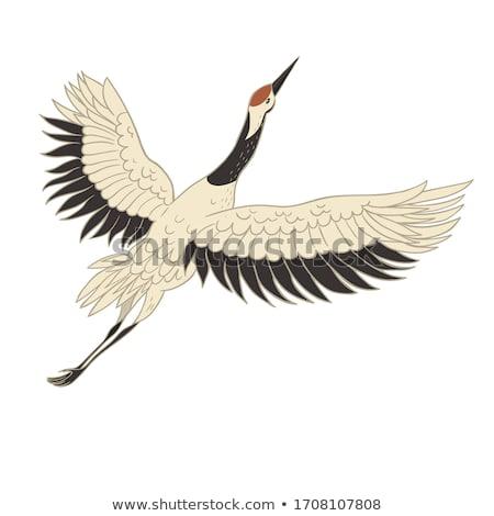 Foto stock: Cegonha · branco · ilustração · projeto · fundo · pássaro