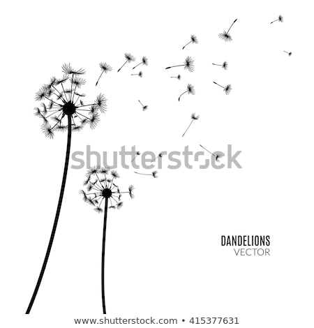 Tarassaco silhouette bianco eps 10 vettore Foto d'archivio © limbi007