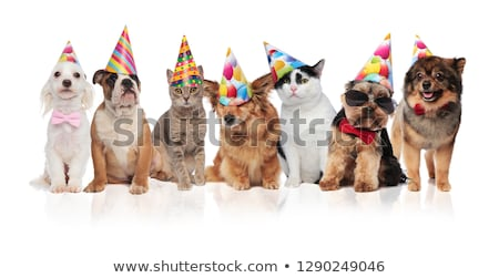 group of seven adorable cats and dogs on birthday party Stock photo © feedough