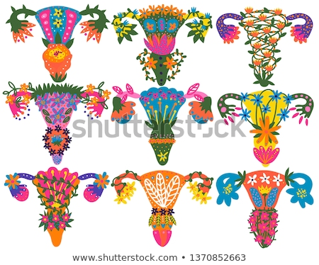 female reproductive organs beautiful design colorful set stock photo © tefi