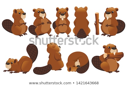 Stock photo: Friendly forest animal, cute brown beaver icon isolated