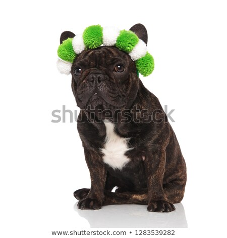 funny french bulldog wearing fluffy green headband looks to side Stock photo © feedough