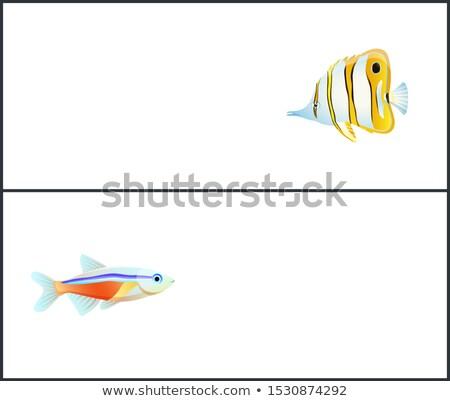 蝶 ネオン 魚 着陸 文字 ストックフォト © robuart