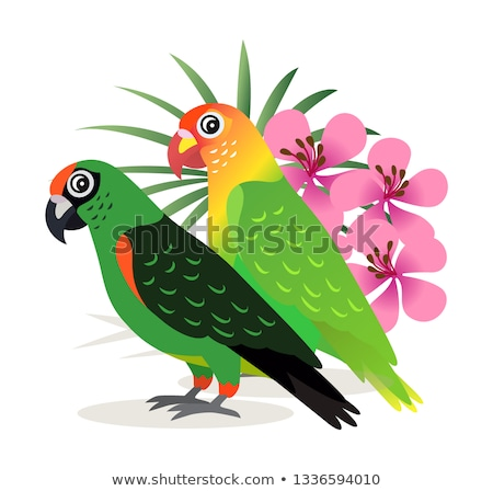 Сток-фото: Two Beautiful Colorful Parrots Lovebird With Pink Flowers Isolated On White Background Exotic Birds