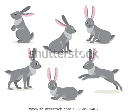 Cute gray jumping rabbit hare isolated on white background Stock photo © MarySan