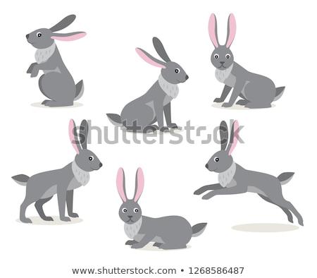 Cute · мало · Bunny · большой · ушки · ходьбе - Сток-фото © marysan