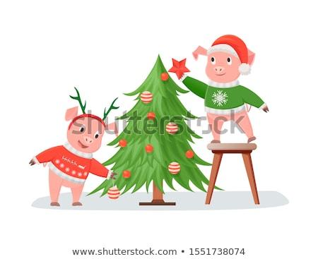 豚 編まれた クリスマスツリー グリーティングカード 帽子 ストックフォト © robuart