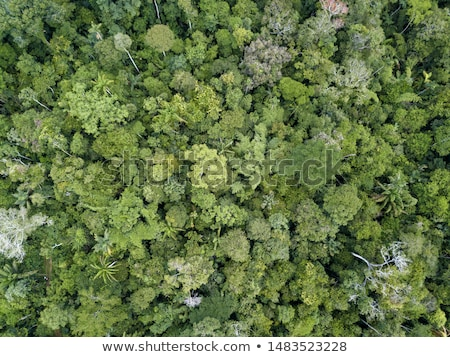 Aerial view of the drone green spaces trees in the summer day. Natural summer background Stock photo © artjazz