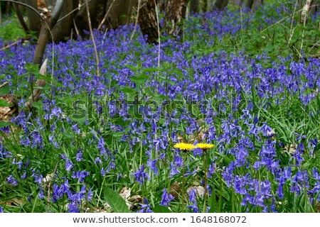 Mar flores silvestres foco azul primavera madeira Foto stock © sarahdoow